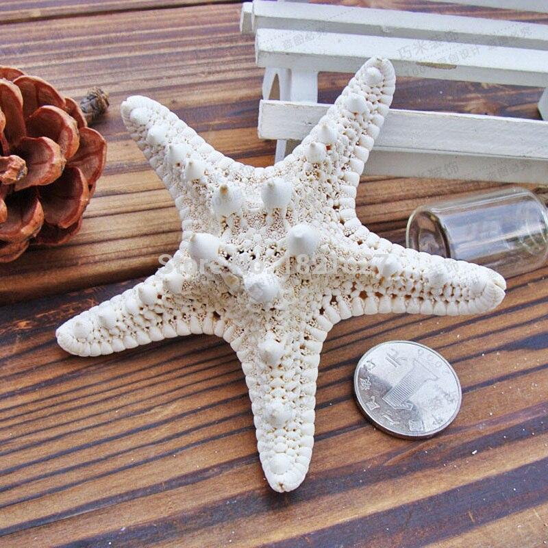 морская звезда морская звезда