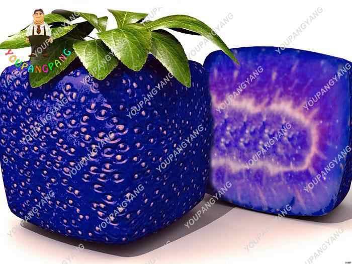 100 шт./пакет Редкие синие Squre Ягоды клубники здоровые экзотические растения хороший вкус фрукты, технология бонзаи, Бонсай завод для домашнего сада