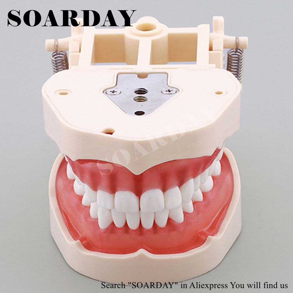 SOARDAY Dental Teaching Standard Model Soft Gingiva Spring Adjustable Dentistry soarday dental endodontic restoration model teaching communication model pathological display dental caries