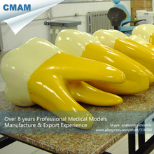CMAM-DT101 Patient Education Tooth Model Permanent 15x Times Teeth Model