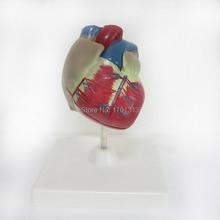 1:1 ПВХ Высокое качество сердечной анатомии модель Спецодежда медицинская учебного пособия Art Инструмент учебных инструмент Clinic фигурки
