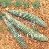 New! GALAXY F1 Momordica charantia,Balsam pear, Bitter Melon Gourd Vegetables Seeds (20 SEEDS)
