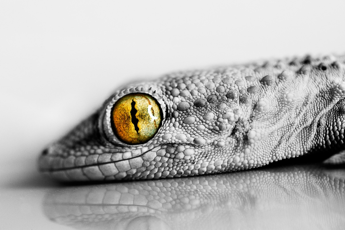 silk canvas print poster (frame available) reptile Lizard eye close-up PSH50 living room home decoration wall decor close-up