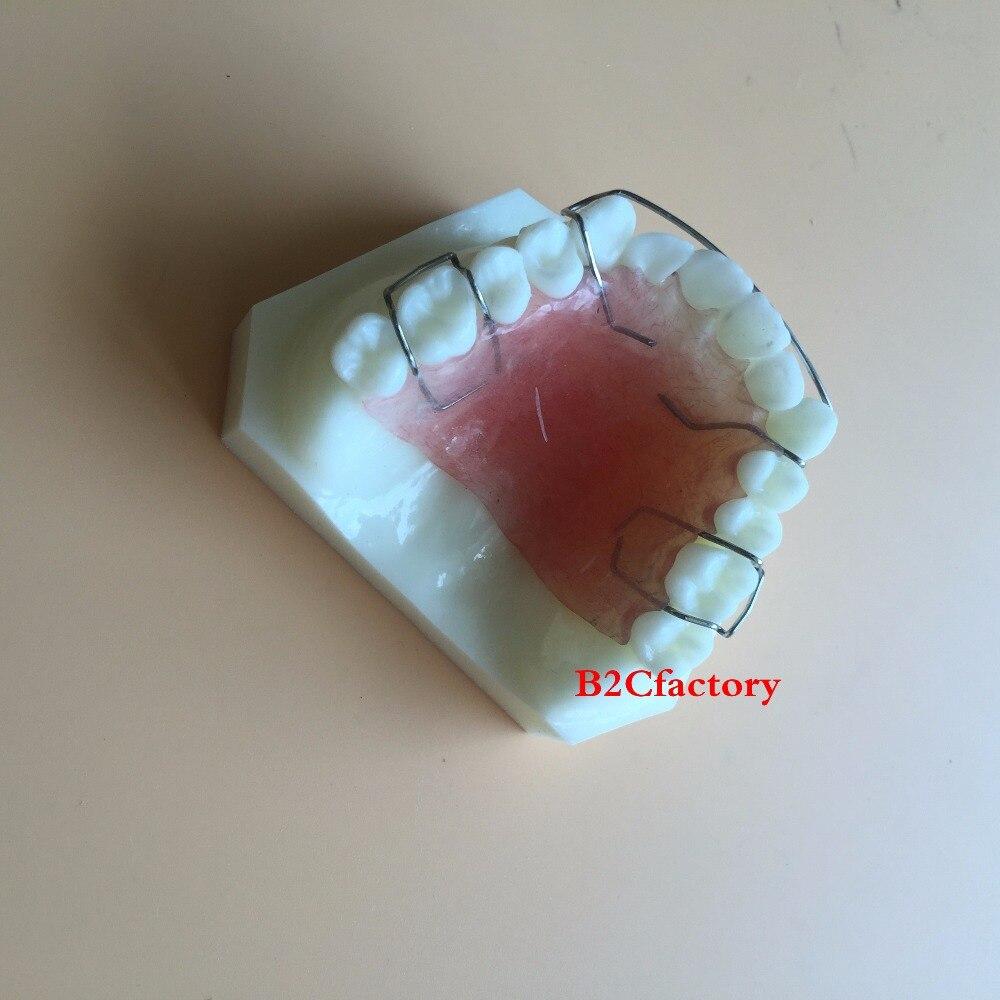 Étude dentaire des dents modèle de retenue Hawley enseigner modèle 3007 01