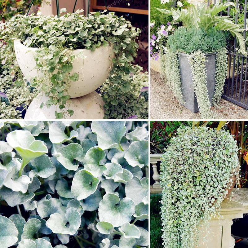 lys NEUF rose 3x verre fleur fine vase set deco design idéal pour Allium