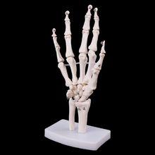 Adereços médicos modelo livre porte mão conjunta esqueleto anatômico modelo humano anatomia médica ferramenta de estudo tamanho da vida