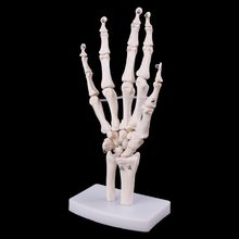 Medical props model Free postage Hand Joint Anatomical Skeleton Model Human Medical Anatomy Study Tool Life Size