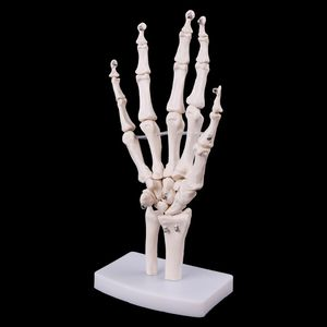 Image 1 - Medical props model Free postage Hand Joint Anatomical Skeleton Model Human Medical Anatomy Study Tool Life Size
