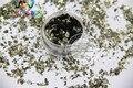 TCM1006 Gris Oscuro de Color Verde Hoja de Mylar Tamaño Copos de Corte Al Azar para la decoración de uñas y otros decoración del arte DIY