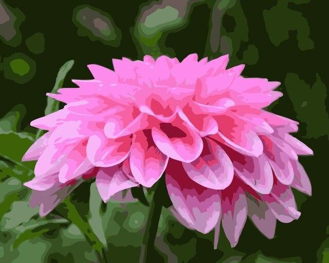 Mahuaf I701 Pink Bunga Dahlia Diy Painting By Numbers Tangan Dicat
