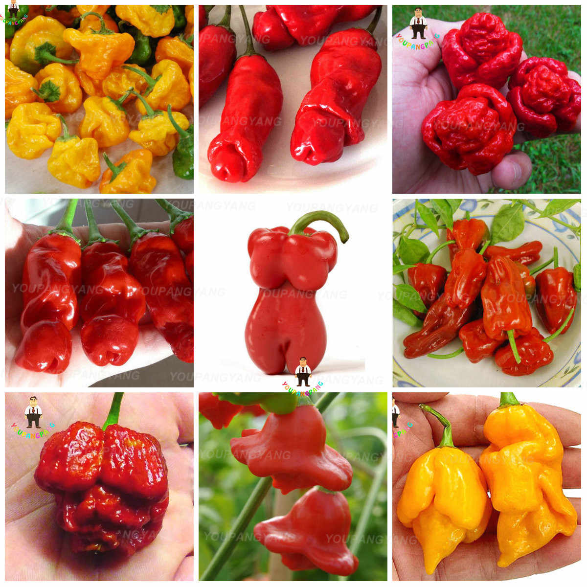 Detail Feedback Questions About Bonsai 50pcs Hottest Pepper Plants
