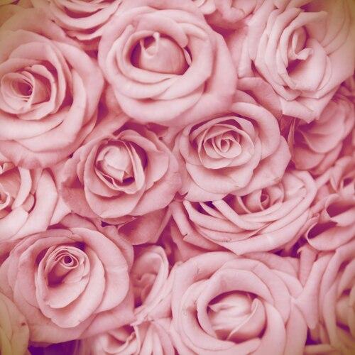 huayi 5x5ft d237a de san valent237n rosa rosas tela backdrops