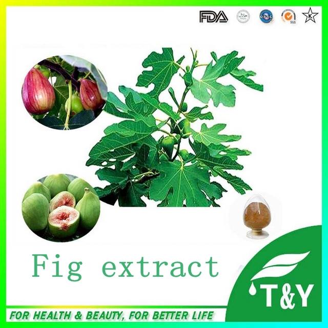 Fig/Extrato de Folha de Figo Extrato Em Pó 10:1 100g