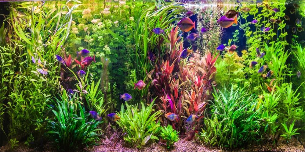 Laeacco Sous-marine Tropicale Vert Aquatiques Couleur Seafish Bébé Scène Fond Photographique Photographie Toile de Fond Pour Photo Studio