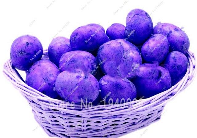 Vendita! 200 pz Gigante di Patate Viola piante Bonsai Nutrizione Arcobaleno di Verdure Per La Casa Giardino Piantare Piante Rare Semente