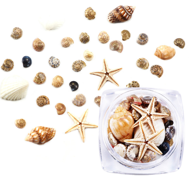 1-Box-3D-Natural-Nail-Art-Decoration-Mini-Conch-Shells-Starfish-Sea-Beach-Ornaments-Manicure-Tools (1)