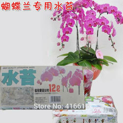 Highquality sphagnum moss bryophytes phalaenopsis butterfly for all kinds of orchid medium moisturizing nutrition soil 150g.jpg 250x250