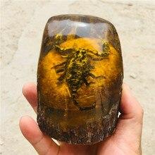 10 см Натуральный Янтарный пчелиный воск сырой камень насекомых дисплей скорпион. «Бабочка». Цикада. Стрекоза
