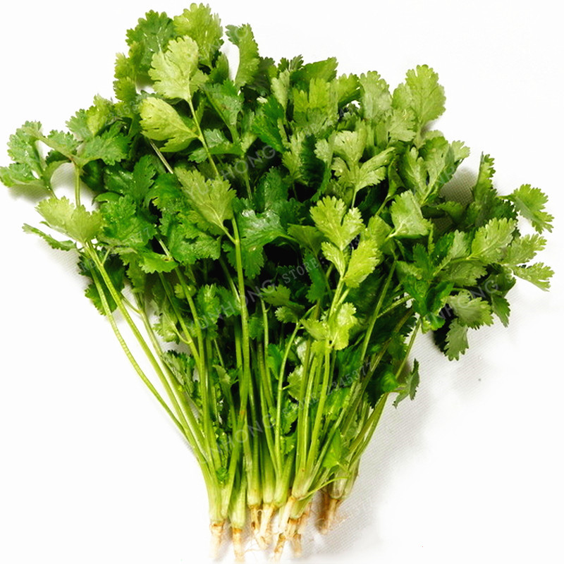50 шт кориандр бонсай кинзы богатый аромат хорошего Пособия по кулинарии травы DIY огород бонсай хороший вкус вкусный здоровый