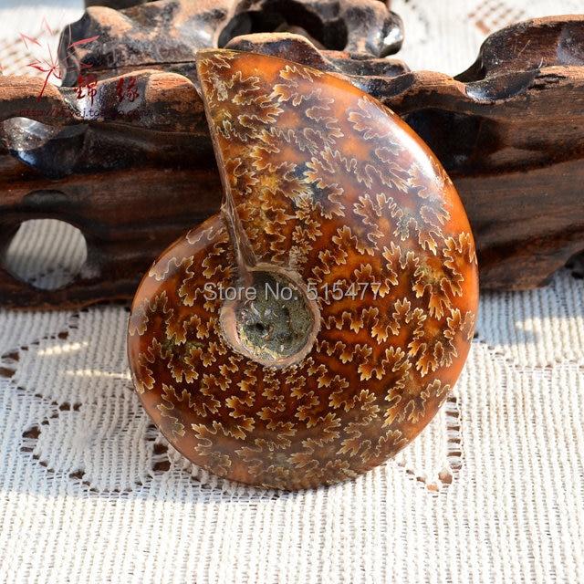 Естественно раковины образцы хризантемы пестрота болт перевалка Лаки Фэн-шуй и винт 200 г-220 г