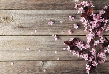 Laeacco Old Wooden Board Blooming Flowers Petal Photography Background Customized Photographic Backdrops For Photo Studio