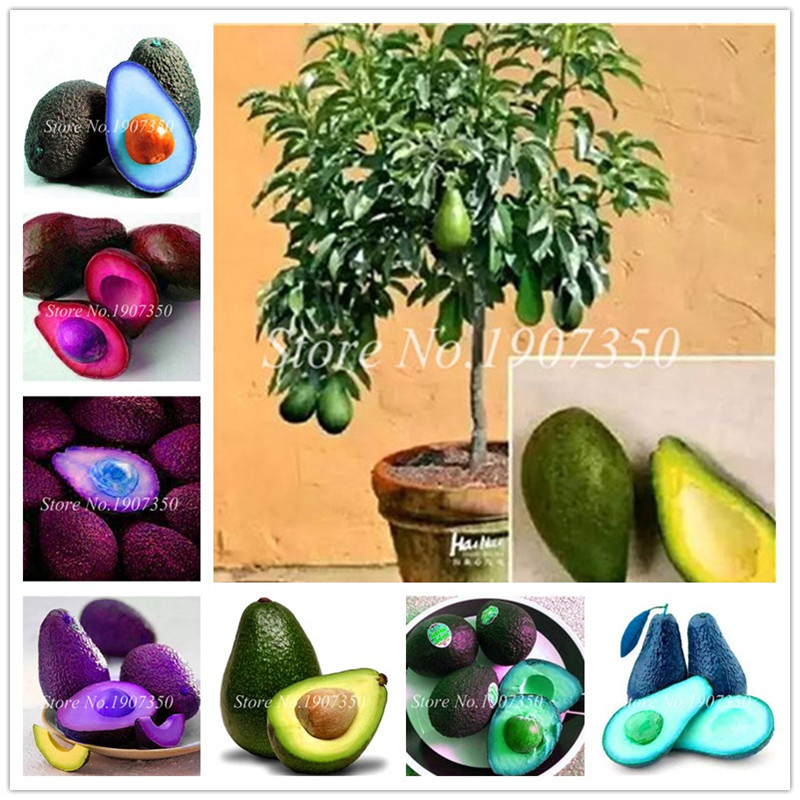 Sale ! 2 Pcs Bonsai Avocado Delicious Sweet Fruit Tree Easy To Grow For Home Garden Organic Vegetable Pot Plant Gift For Kids