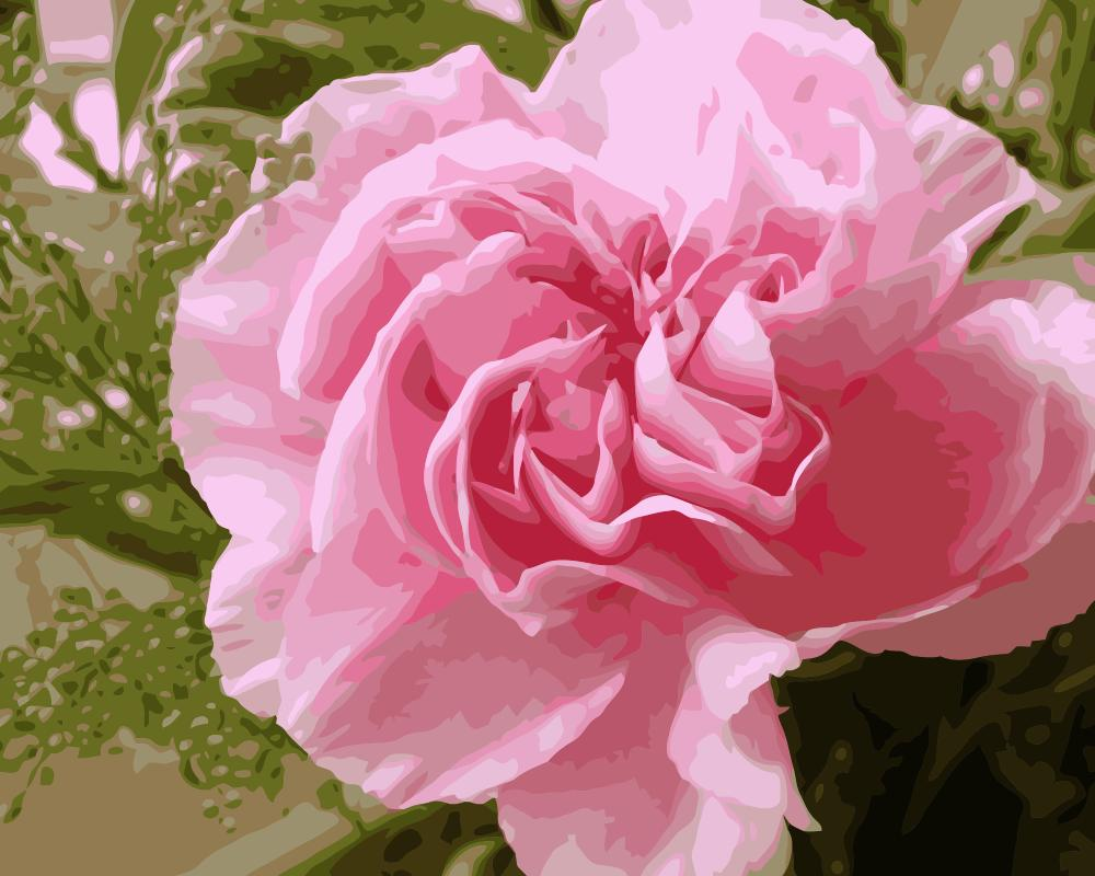 Mahuaf I938 Pink Carnations Flowers Painting By Numbers Hand Paint