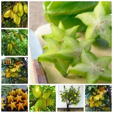Organic 50 pcs/ bag Imported Carambola Bonsais Star Fruit Tree Shrub Fruit Edible Starfruit for Home Garden Flower Pot Planters(China)