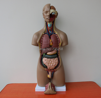 ISO Quality Certification 55cm Both Sexes 20 Torso Model,Human Trunk Anatomical Model,Body Anatomy Model цена 2017