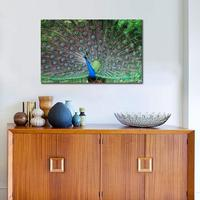 Peacock Tail Male Patterns Posture Poster Print Animals Birds Wall Picture