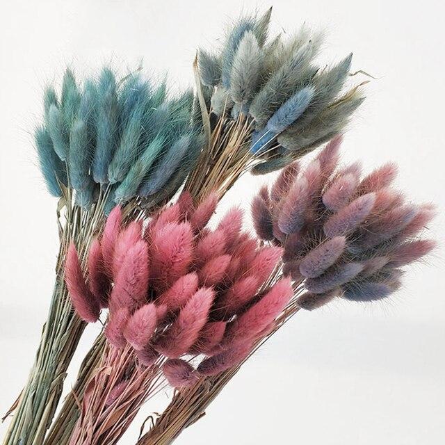 Ramo de flores secas naturales Lagurus Ovatus, decoración para el hogar, pascuas y bodas, hierba de cola de conejo real de color gradiente, 30 unidades por lote