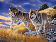 5D DIY Diamond Painting animal wolf picture Oil Paintings Crossing Stitch Kits diamond Embroidery Full Mosaic Needlework