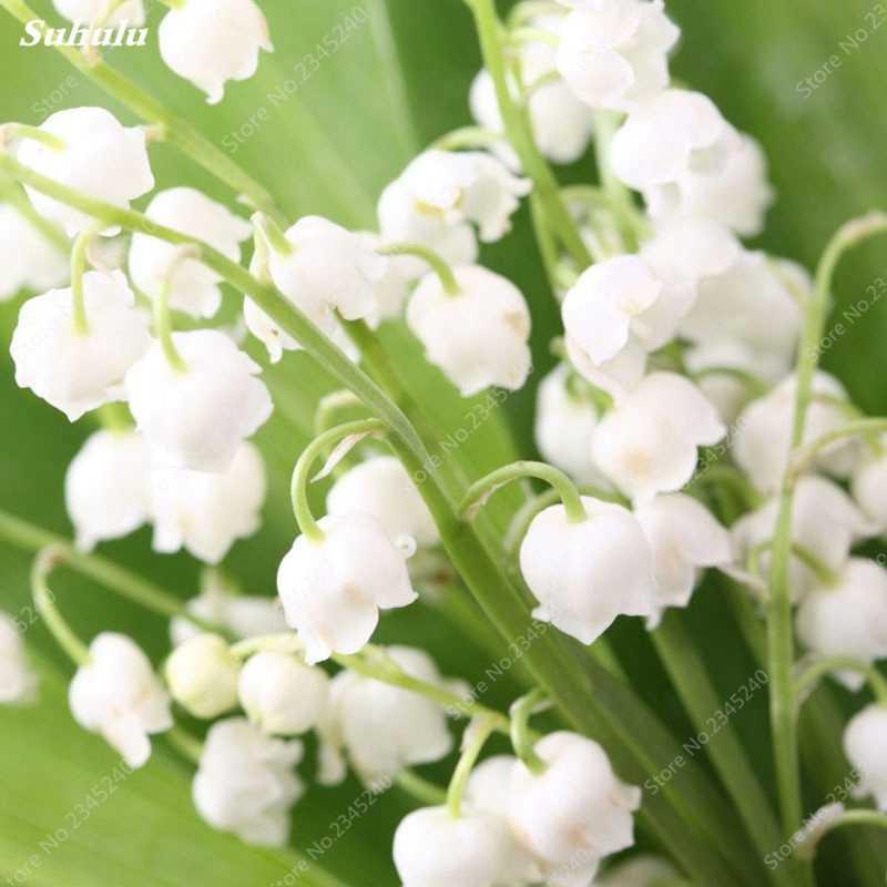 משלוח חינם 100 יח'\שקית מעורב פעמון סחלב בונסאי פרח רב שנתי פעמונית פרח Convallaria עציץ עבור בית גן