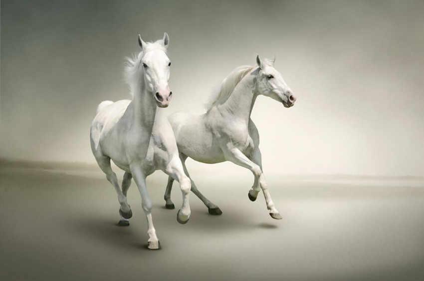 Custom 3d Mural Two Beautiful Running White Horses Papel De