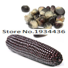 11.11 On Sale! 10 Pcs Delicious Black Waxy Corn Cephalostachyum Green Vegetable Fruit Plant For Home Garden Bonsai Tree Ornament(China)