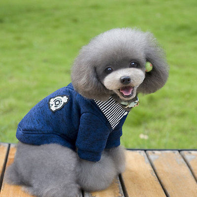 Малко куче топло дрехи сладък кученце - Продукти за домашни любимци