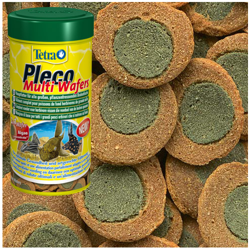 Tetra pleco multi wafers suckermouth catfish benthic fish for Bottom feeder fish list