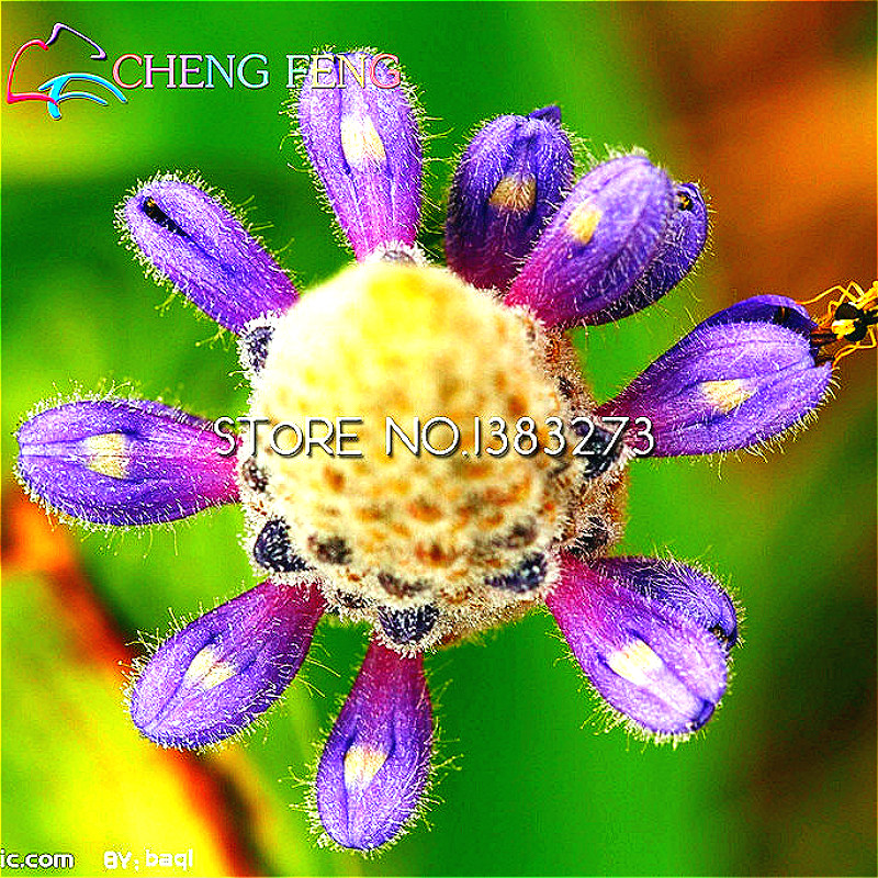100pcs water hyacinth seeds pot seeds flower seeds bonsai for Ornamental fish pond supplies
