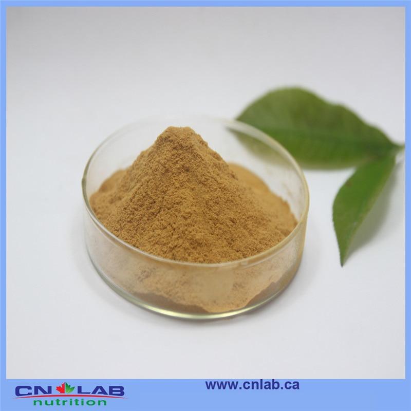 Natural herbal medicine Flavone glycoside 24% ginkgo biloba leaf extract 250g