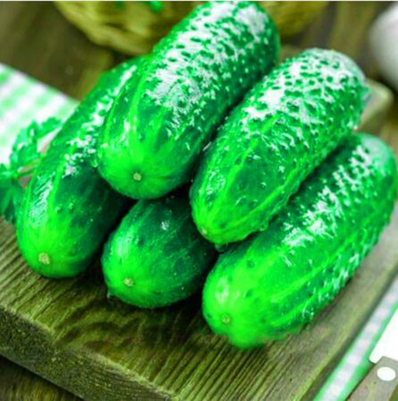 100 Pcs Cucumber Seeds Japanese Cucumber Bonsai Seeds Vegetable Fruit Plants For Home Organic Seeds For Home Garden Planting