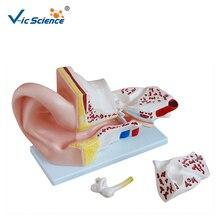 Передовой ПВХ 5 раз увеличена человеческое ухо анатомическая модель для студентов преподавания