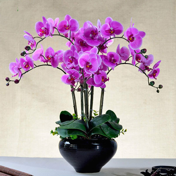 Rare Orchids Flower Bonsai Butterfly Orchid Seeds Beautiful Phalaenopsis Sementes Gift For Garden 100 Pcs / Lot Free Shipping-in Bonsai from Home & Garden ...