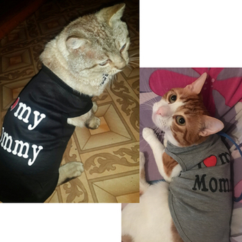 Cute Cat Clothes Spring Summer Pet Clothing 1