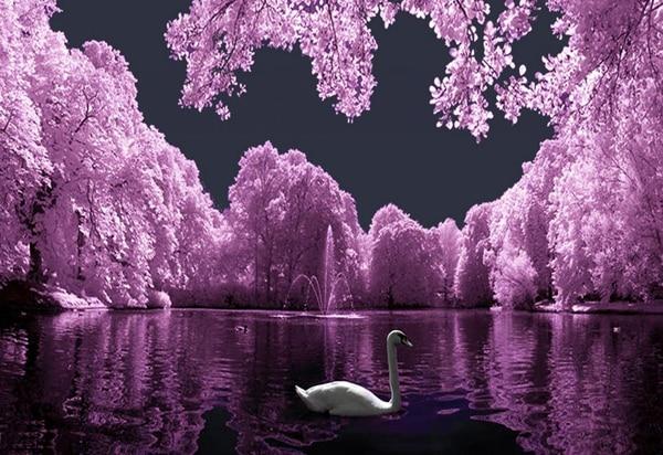 100% QualitäT Schöne See Und Swan Bild 5d Diy Diamant Malerei Kreuzstich Lila Blume Und Baum Hobby Handwerk Wand-dekor Aufkleber