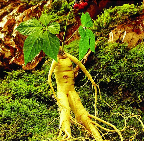 Online Buy Wholesale Ginseng Herbal Medicine From China
