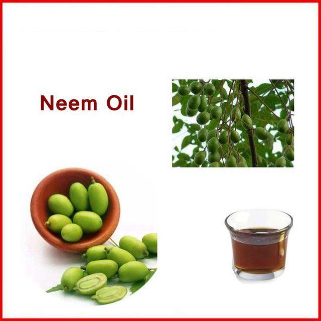 100% naturel et pur neem/margosa huile avec livraison gratuite