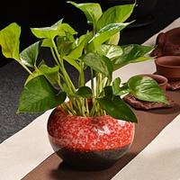 Fashion Personality Color Ceramic Flower Pot