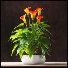 ИНДИГО-Калла Букет (18 шт. Листья + 3 шт. Цветы + Корни) Антуриум Цветок Touch Калла Свадьба цветочные Цветок Настольный Бесплатная Доставка