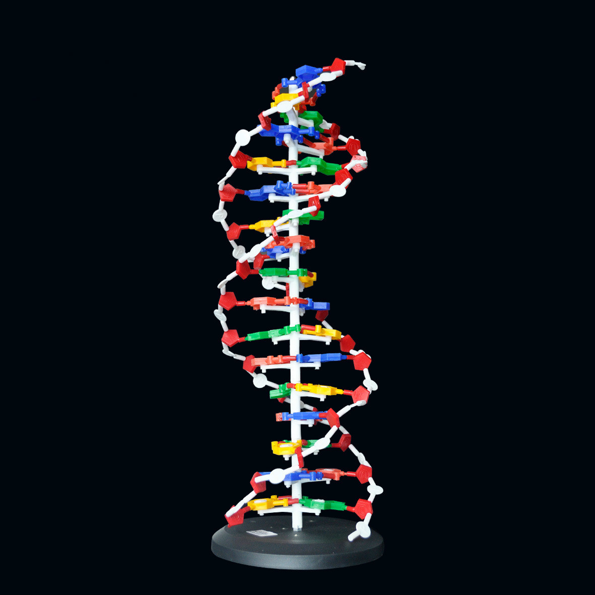 60cm High Dna Double Helix Structure Model Base Pair