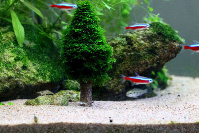 aquarium aquatic plants micro landscape moss tree fish tank christmas tree maker decoration - Christmas Aquarium Decorations